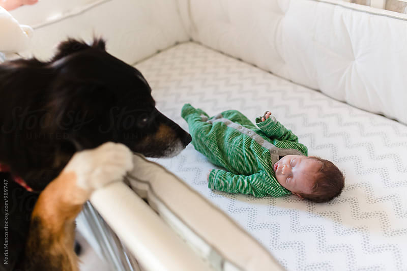dog looks at baby in crib by Maria Manco for Stocksy United