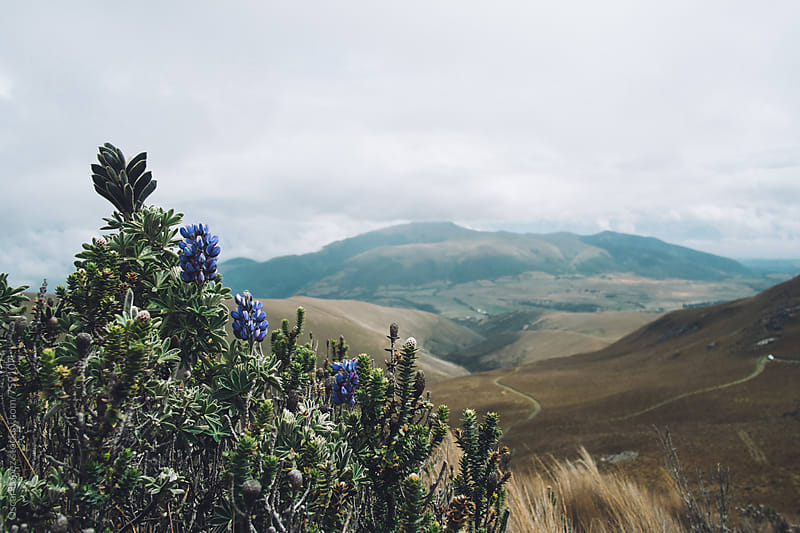 Beautiful Landscape with Wildflowers and Rolling Hills by Oscar Lopez for Stocksy United