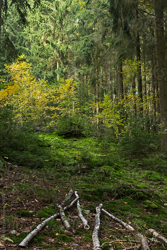 Fall forest in Germany by Melanie Kintz for Stocksy United