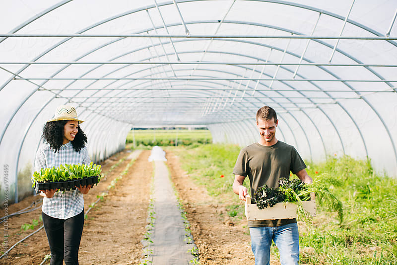 Farmer couple holding organic vegetables in a greenhouse. by BONNINSTUDIO for Stocksy United