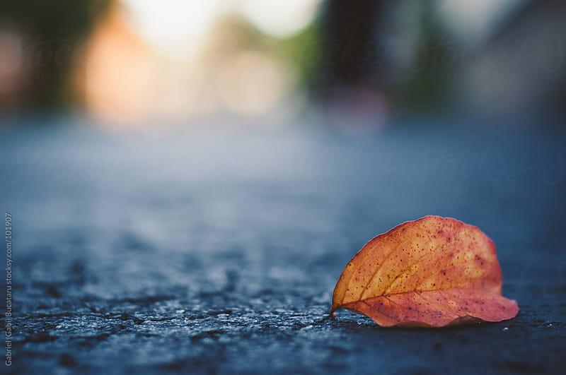 fallen leaf by Gabriel (Gabi) Bucataru for Stocksy United
