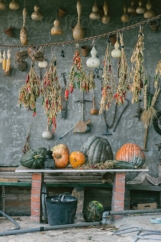 pumpkins in a rural house by Javier Pardina for Stocksy United