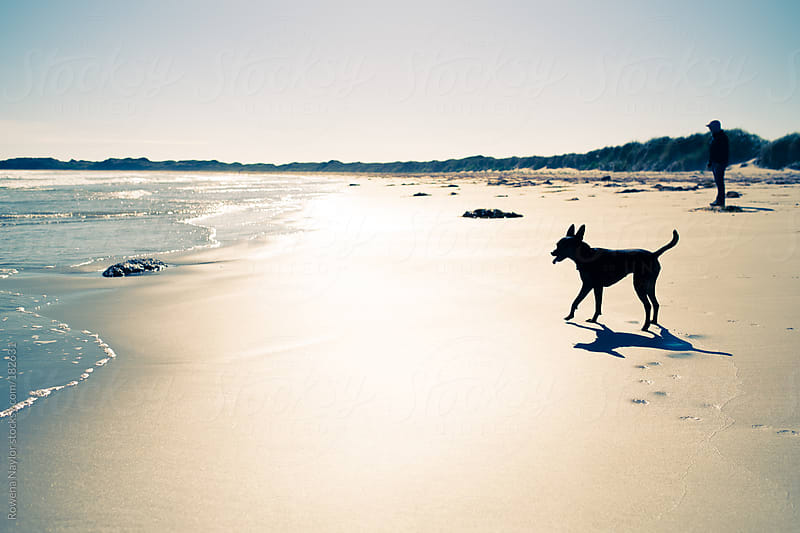 Person and dog on sunset beach in silhouette by Rowena Naylor for Stocksy United
