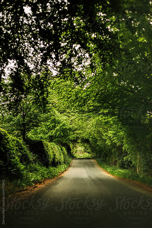 Leafy country road. by Darren Muir for Stocksy United