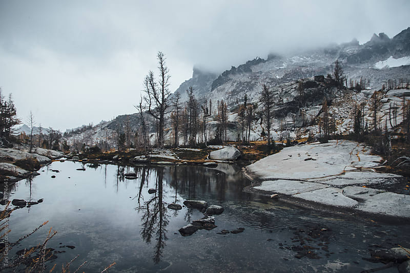 Reflection of tree on lake in stormy weather by Tari Gunstone for Stocksy United