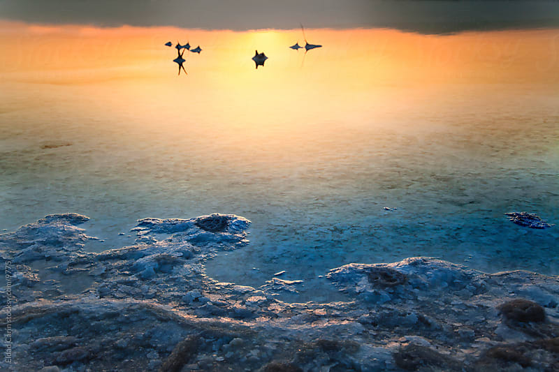 Dead Sea Sunrise - Colorful Shallow Waters Salt Texture at Dawn by Eldad Carin for Stocksy United