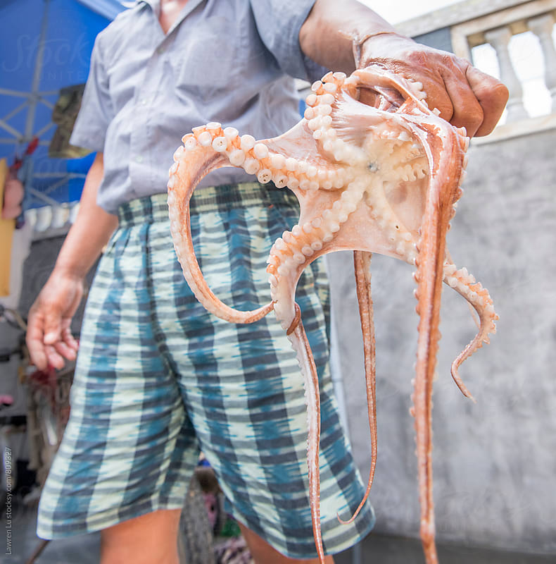 A living octopus just be caught and lifted up by fisherman by Lawren Lu for Stocksy United