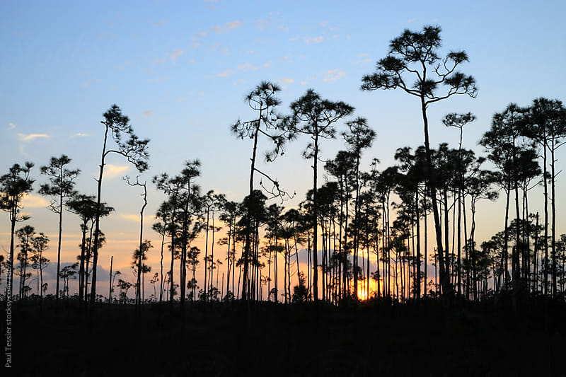 Everglades Sunset by Paul Tessier for Stocksy United