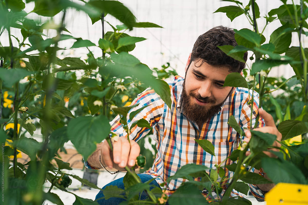 Man Checking Plants In A Greenhouse By Addictive Creatives