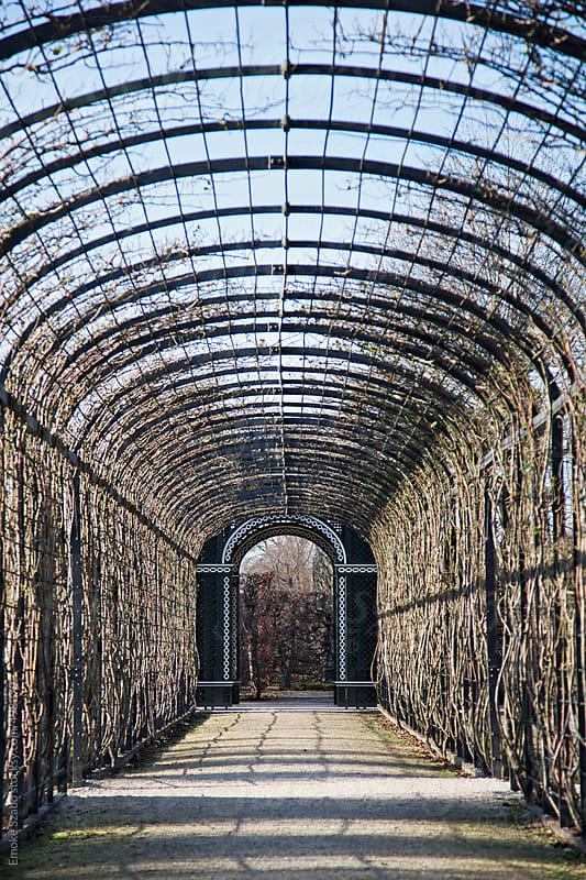 Tree tunnel walkway at winter by Emoke Szabo for Stocksy United