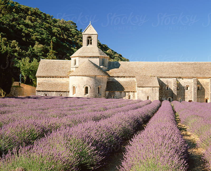 Senanque Abbey (Abbaye de Senanque) and lavender fields, Gordes, Provence, France, Europe  by Gavin Hellier for Stocksy United