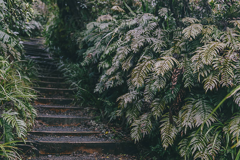 Stairs in a forest overgrown with ferns by Andrey Pavlov for Stocksy United