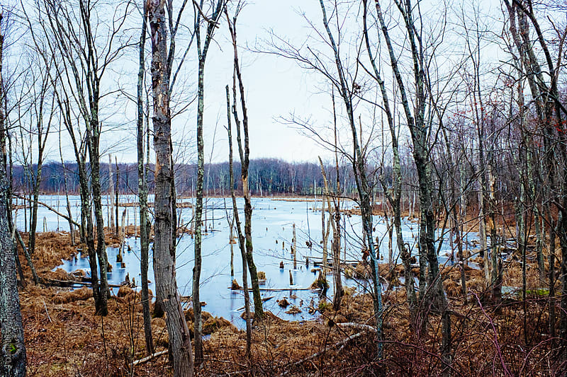 a frozen lake in winter with bare trees in the foreground. by J Danielle Wehunt for Stocksy United