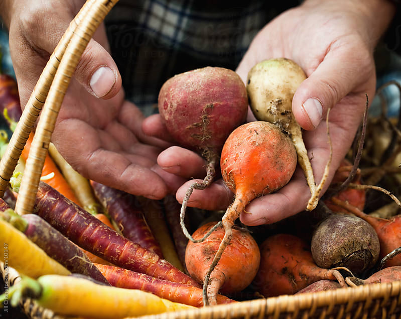 Heirloom Root Vegetables by Jill Chen for Stocksy United
