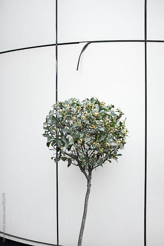 A small bush by a building by James Ross for Stocksy United