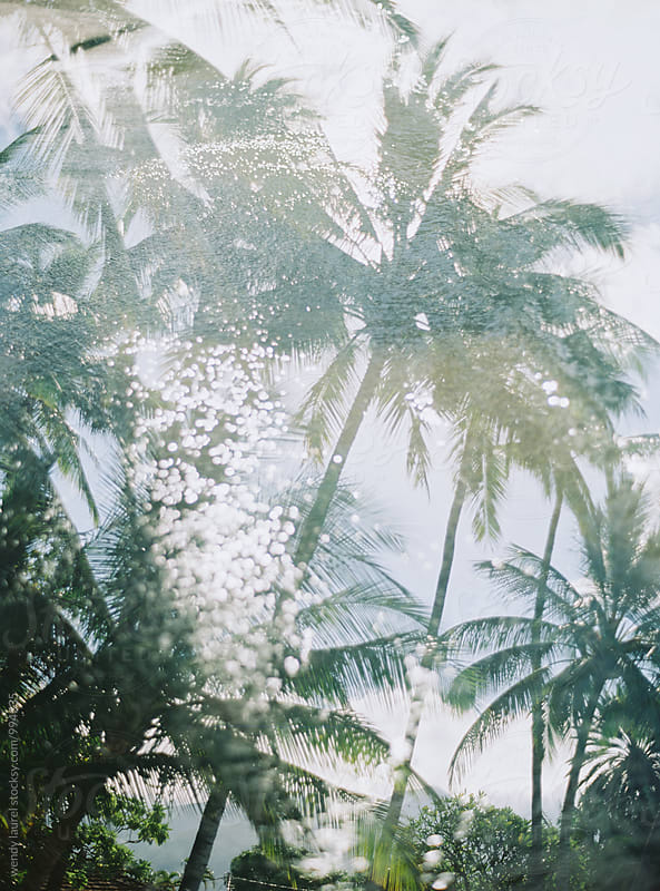 palm trees with ocean double exposure by wendy laurel for Stocksy United