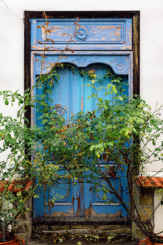 Rustic blue door with two small plants by Pixel Stories for Stocksy United