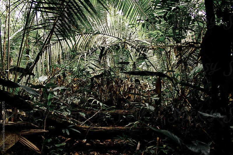 Rainforest - Brazil by Felipe Neves for Stocksy United