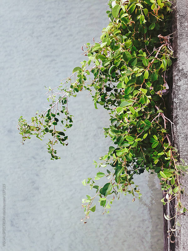 Green Plant Growing On Bridge by VISUALSPECTRUM for Stocksy United