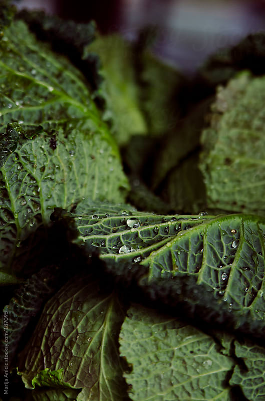 Fresh spring kale,close up by Marija Anicic for Stocksy United
