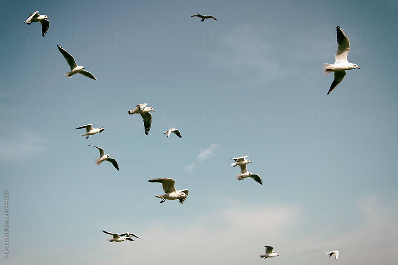 Seagulls flying at sea by Marcel for Stocksy United
