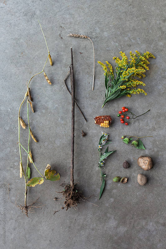 Findings from an autumn nature walk, composed against a concrete background by Amanda Worrall for Stocksy United