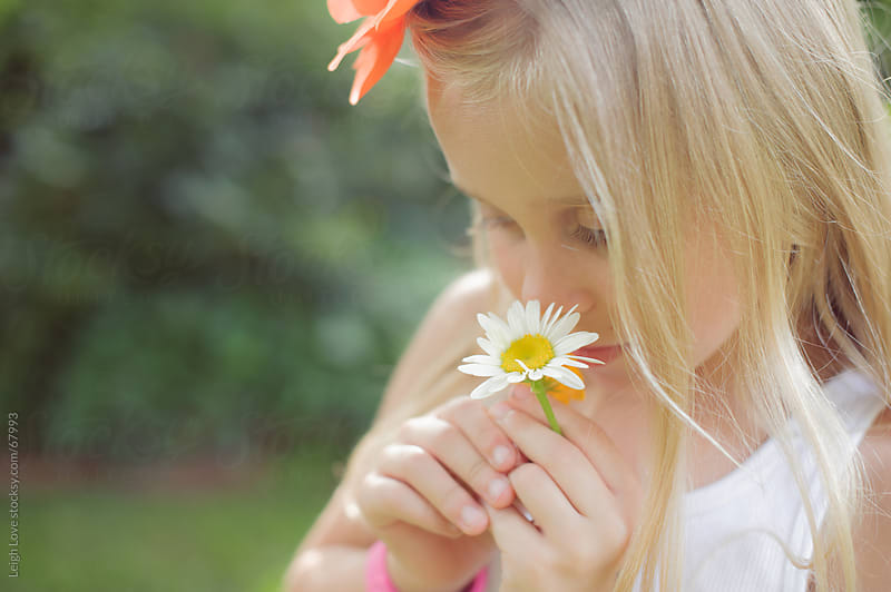 Blonde Haired Child Smelling a Daisy by Leigh Love for Stocksy United