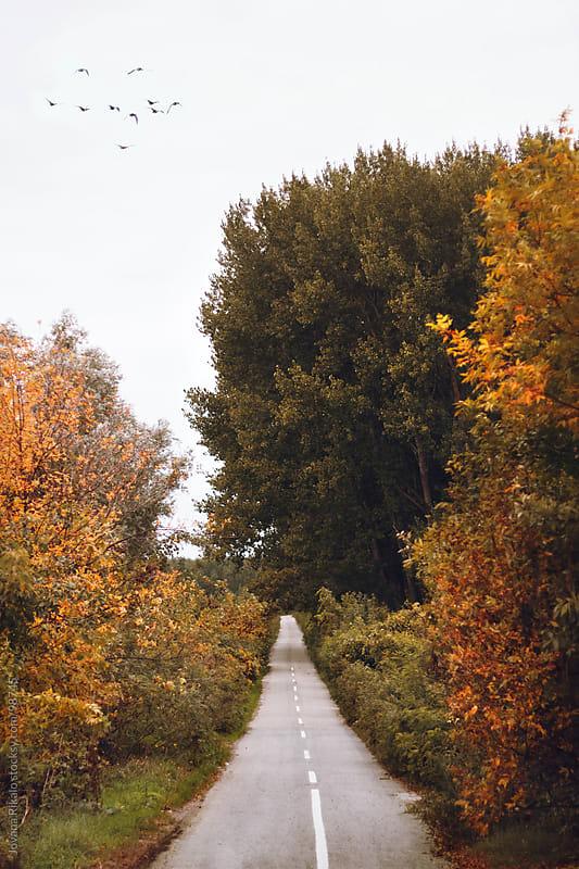 Road ahead by Jovana Rikalo for Stocksy United