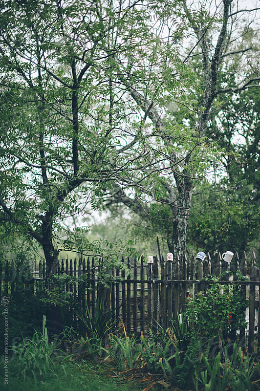 Green Garden with Wood Fence and Trees by Briana Morrison for Stocksy United