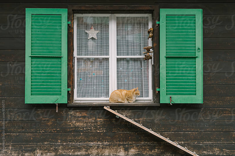 Cat on a window by Maa Hoo for Stocksy United