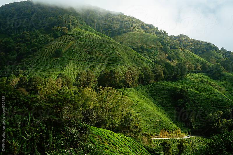 Road trough tea plantations by Artem Zhushman for Stocksy United