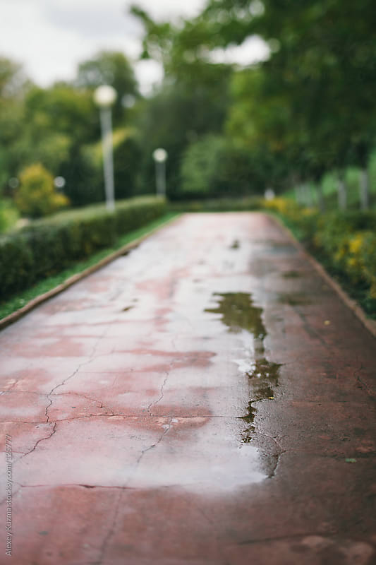 rainy day by Alexey Kuzma for Stocksy United