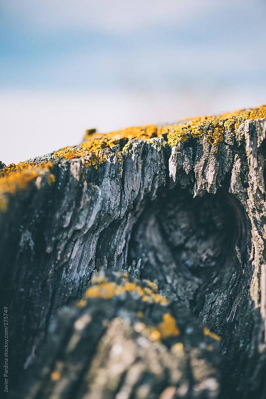 landscape of wood coast by Javier Pardina for Stocksy United