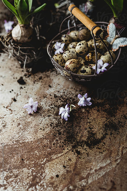Quail eggs and hyacinth by Tatjana Zlatkovic for Stocksy United