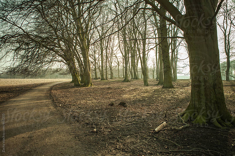Misty forest by Zocky for Stocksy United