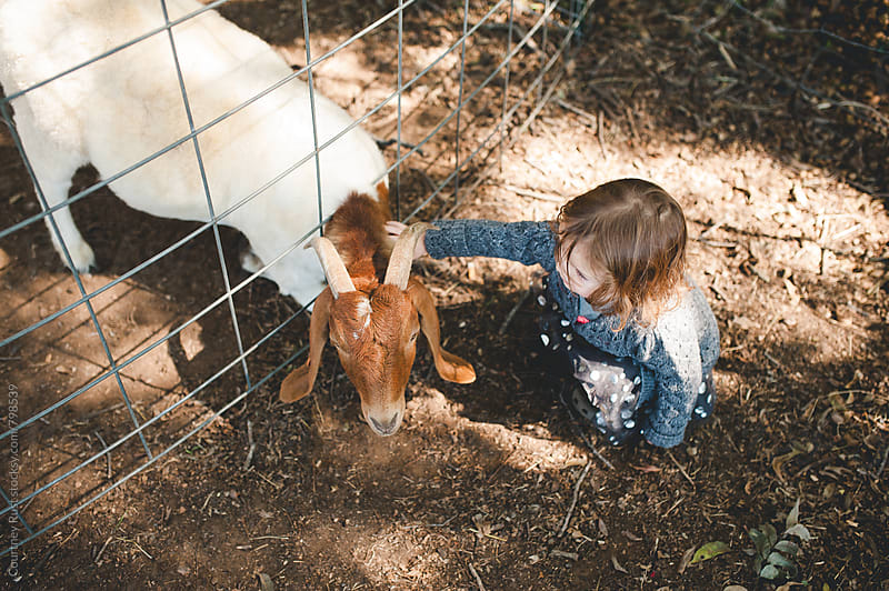 Petting goats by Courtney Rust for Stocksy United