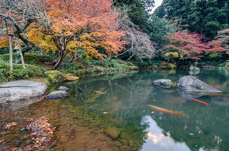 A Japanese Garden Pond in Autumn by Leslie Taylor for Stocksy United