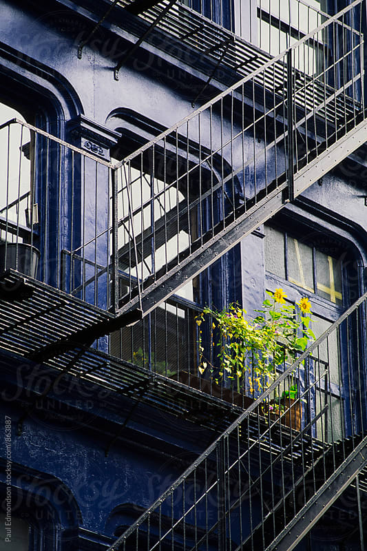 Apartment building and sunflower on fire escape, NY, NY, USA by Paul Edmondson for Stocksy United