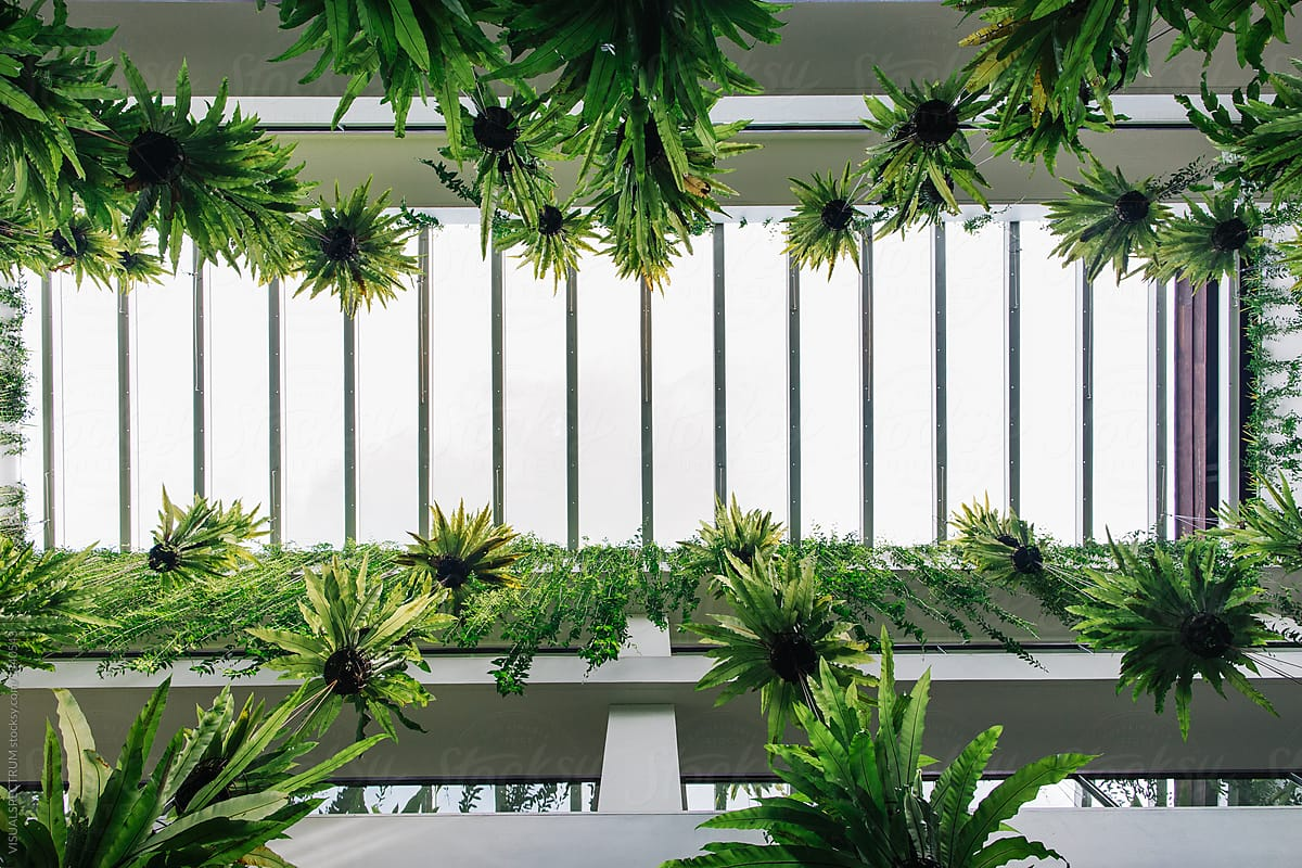 Vertical Garden   Green Tropical Plants Hanging In Bright White Building By  VISUALSPECTRUM For Stocksy United