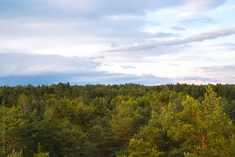 Norwegian woods by Jelena Jojic Tomic for Stocksy United