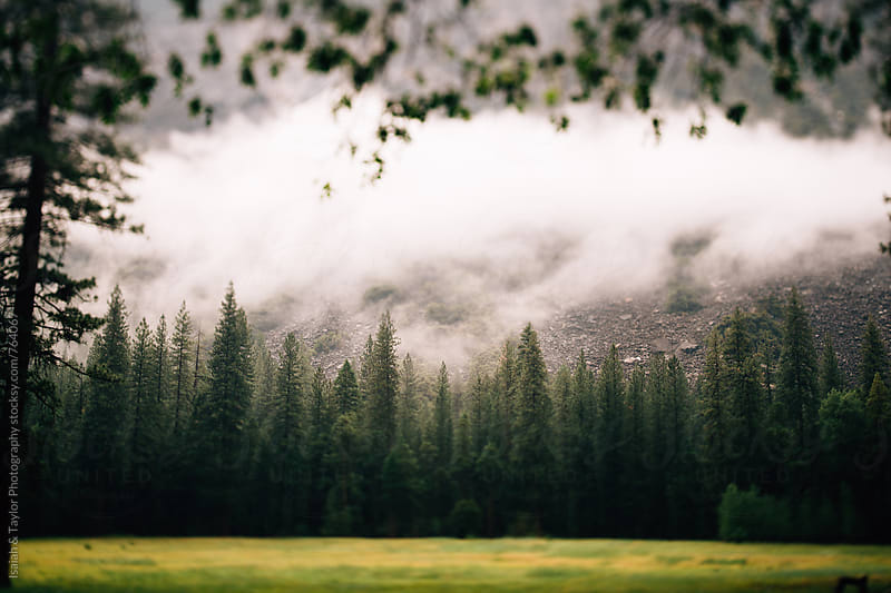 Clouds above forest trees by Isaiah & Taylor Photography for Stocksy United