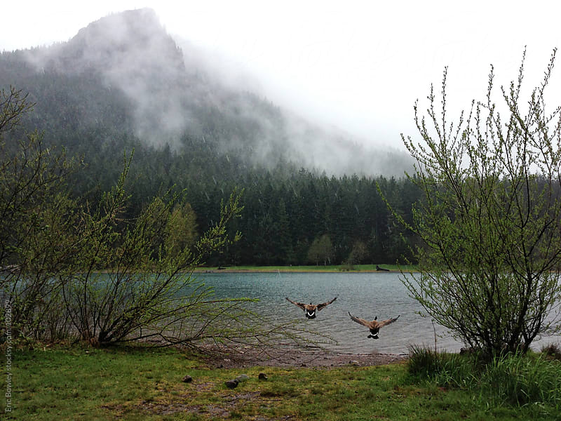 Foggy Mountain & Soaring Geese  by Eric Bowley for Stocksy United