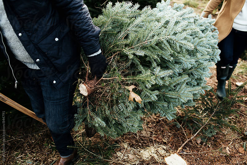 Christmas Tree by Brett Donar for Stocksy United