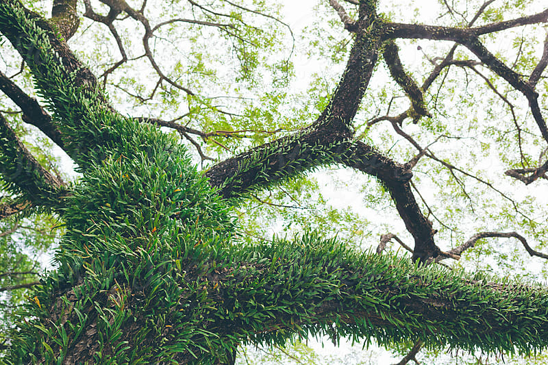 Tree in the Rainforest by Good Vibrations Images for Stocksy United