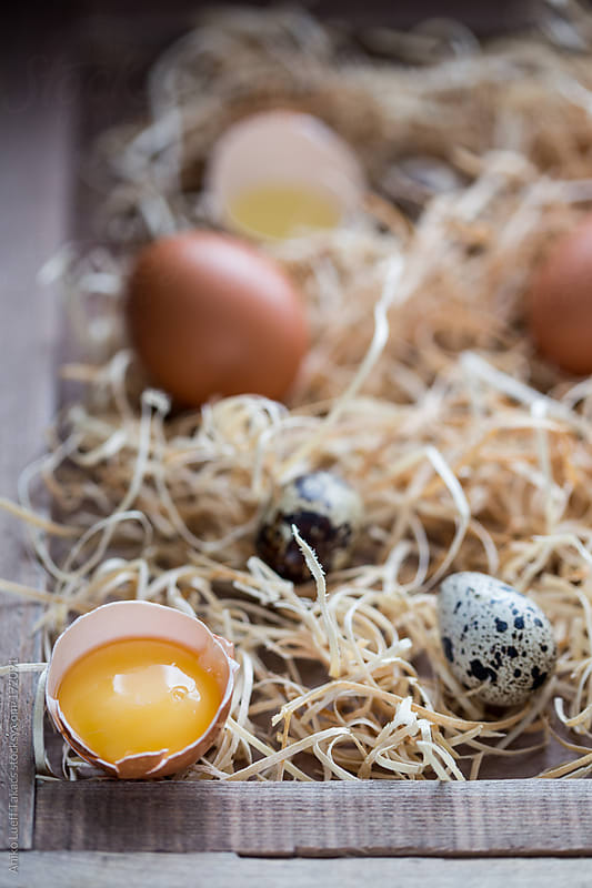 Eggs on hay  by Aniko Lueff Takacs for Stocksy United