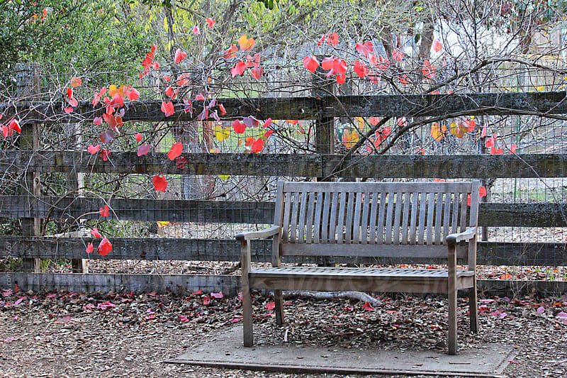 Lone bench sits near fence with vines by Monica Murphy for Stocksy United
