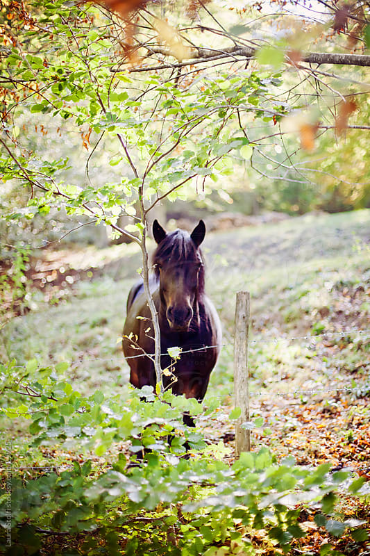 Horse standing in autumnal park close to a tree and looking straight at camera by Laura Stolfi for Stocksy United