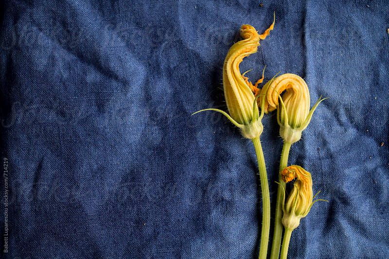 Pumpkin flowers on a blue linen by Babett Lupaneszku for Stocksy United