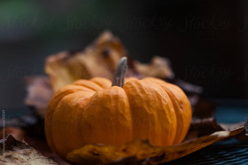 Small orange pumpkin sitting in Autumn leaves by Kerry Murphy for Stocksy United