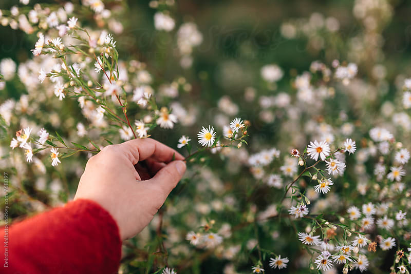 hand picking autumn wildflowers by Deirdre Malfatto for Stocksy United